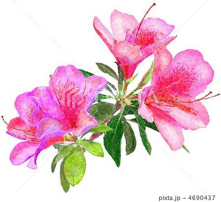 ツツジ 春の花 イラスト 5月の花のイラスト素材 Pixta