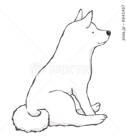 和犬 日本犬 紀州犬 白犬のイラスト素材 Pixta