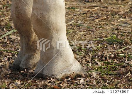足 キリン 有蹄類 ひづめの写真素材 - PIXTA