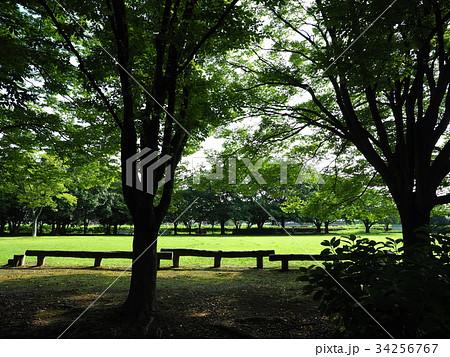 公園 犀川 緑地