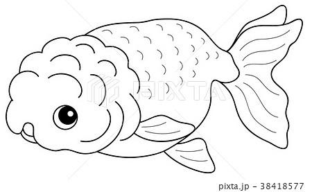 塗り絵 魚 金魚 ランチュウのイラスト素材 Pixta