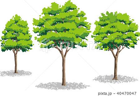 添景樹のイラスト素材 Pixta
