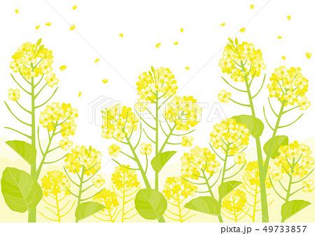 花畑 背景 春 自然 イラスト かわいい 風景のイラスト素材 Pixta