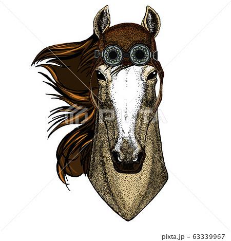 駿馬の写真素材 - PIXTA
